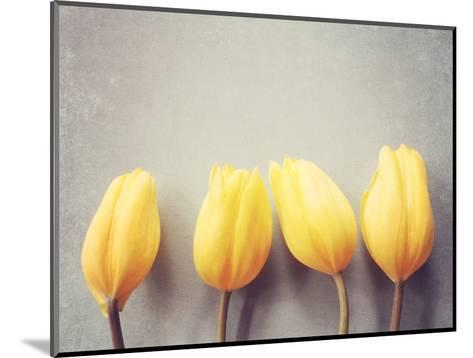 Four Yellow Tulips Against a Textured Grey Blue Background-Susannah Tucker-Mounted Photographic Print
