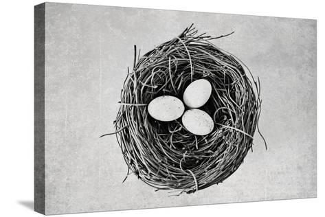 Nest-Susannah Tucker-Stretched Canvas Print