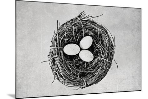 Nest-Susannah Tucker-Mounted Photographic Print