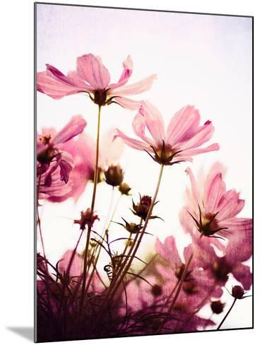 Her Secret Garden-Susannah Tucker-Mounted Photographic Print