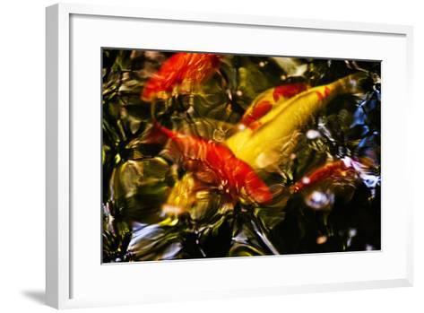 Koi-Steven Boone-Framed Art Print