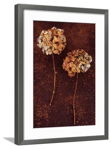 Hydrangea-Den Reader-Framed Art Print