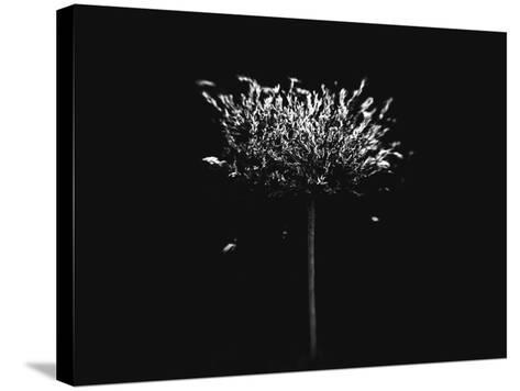 A Small Solitary Tree-Henriette Lund Mackey-Stretched Canvas Print