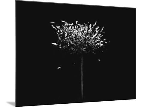 A Small Solitary Tree-Henriette Lund Mackey-Mounted Photographic Print