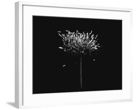 A Small Solitary Tree-Henriette Lund Mackey-Framed Art Print
