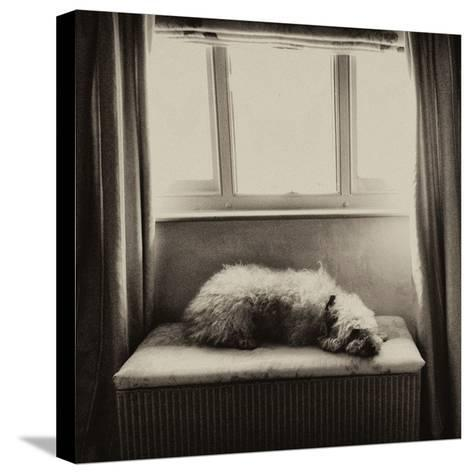 Under the Window-Tim Kahane-Stretched Canvas Print