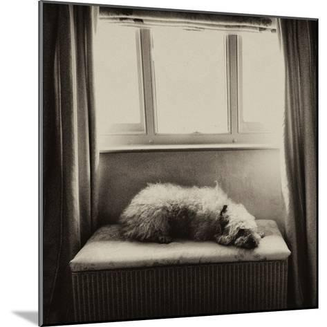 Under the Window-Tim Kahane-Mounted Photographic Print