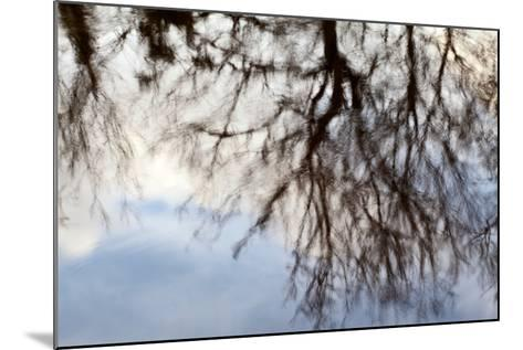Reflections of Trees in Water-Mark Sunderland-Mounted Photographic Print