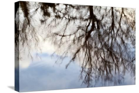 Reflections of Trees in Water-Mark Sunderland-Stretched Canvas Print