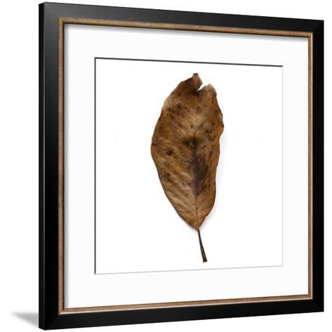 Decaying Leaf-Clive Nolan-Framed Art Print