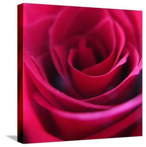 Red Rose-Carolina Hernandez-Stretched Canvas Print