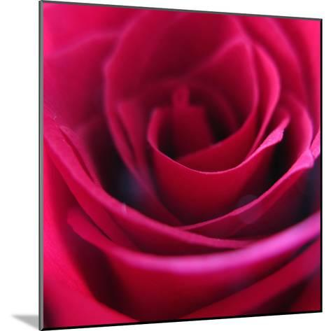 Red Rose-Carolina Hernandez-Mounted Photographic Print
