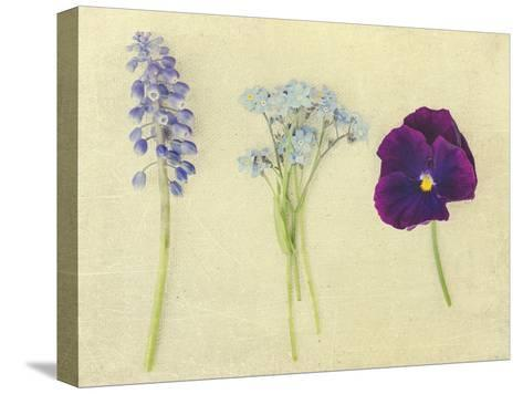 Puple and Blue Flowers-Elizabeth Urqhurt-Stretched Canvas Print