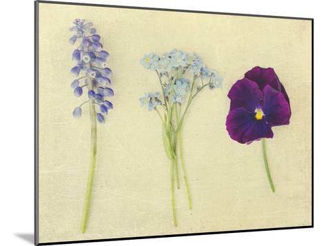 Puple and Blue Flowers-Elizabeth Urqhurt-Mounted Photographic Print