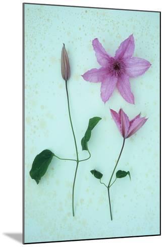 Purple Flower-Den Reader-Mounted Photographic Print