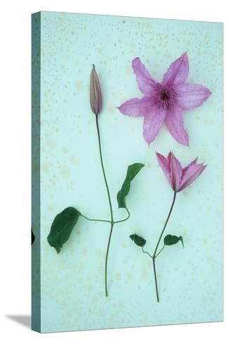 Purple Flower-Den Reader-Stretched Canvas Print