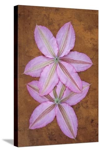 Purple Flowers-Den Reader-Stretched Canvas Print