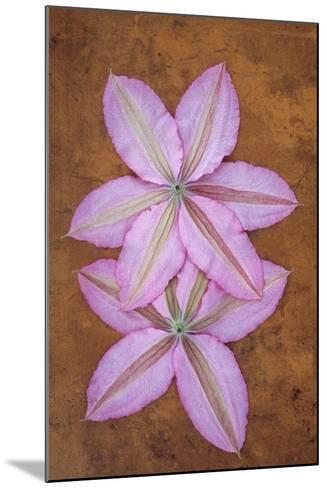 Purple Flowers-Den Reader-Mounted Photographic Print
