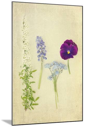 Blue and Purple Flowers-Elizabeth Urqhurt-Mounted Photographic Print