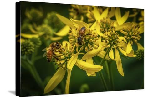 Bees on Flowers-Stephen Arens-Stretched Canvas Print