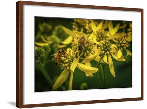 Bees on Flowers-Stephen Arens-Framed Art Print