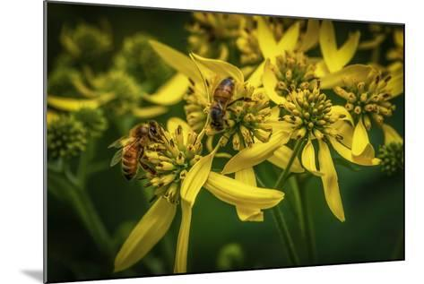 Bees on Flowers-Stephen Arens-Mounted Photographic Print