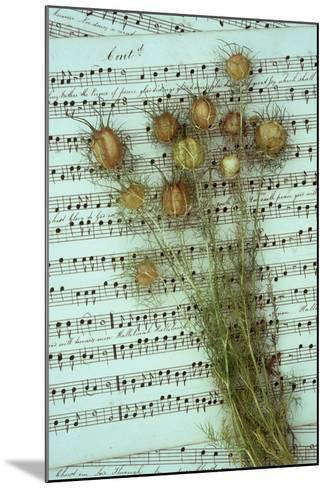 Seed Heads-Den Reader-Mounted Photographic Print