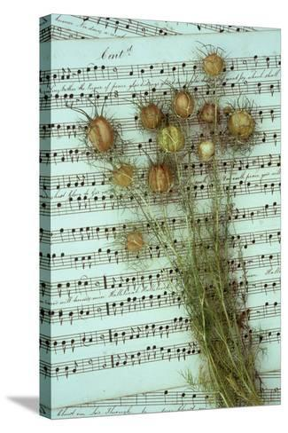 Seed Heads-Den Reader-Stretched Canvas Print