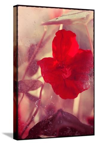 Red Flowers-Mia Friedrich-Stretched Canvas Print