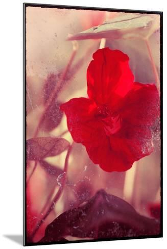 Red Flowers-Mia Friedrich-Mounted Photographic Print