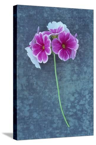 Pink Flowers-Den Reader-Stretched Canvas Print