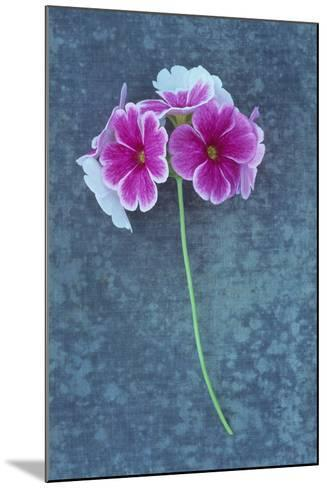 Pink Flowers-Den Reader-Mounted Photographic Print