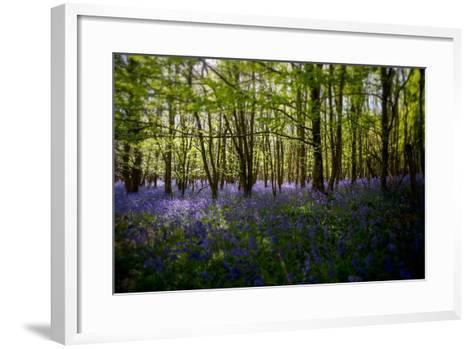 Bluebells in Woods-Rory Garforth-Framed Art Print