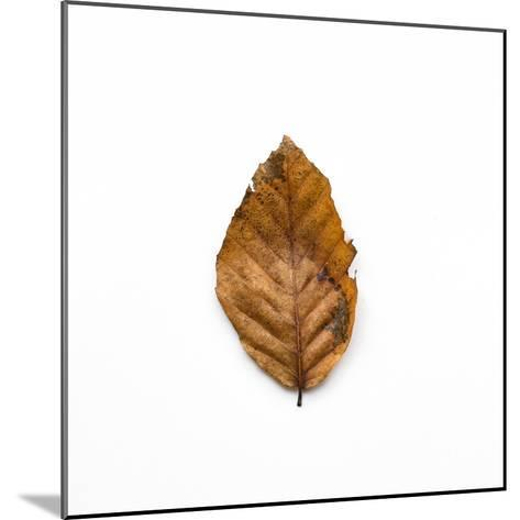 Decaying Leaf-Clive Nolan-Mounted Photographic Print