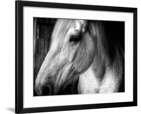 Old Friend-Stephen Arens-Framed Art Print