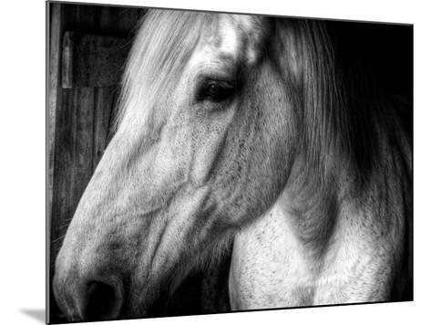 Old Friend-Stephen Arens-Mounted Photographic Print