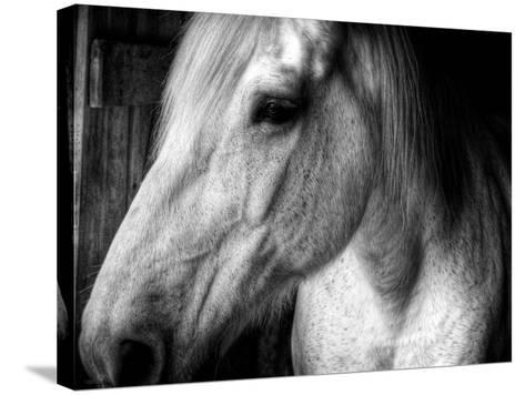 Old Friend-Stephen Arens-Stretched Canvas Print
