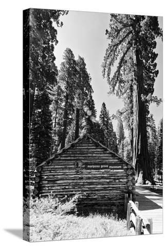 Sequoia - Mariposa Grove Museum - Yosemite National Park - Californie - United States-Philippe Hugonnard-Stretched Canvas Print