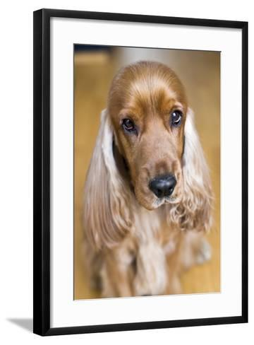 Dog Breeds - Cocker Spaniel - Puppies - English Cocker-Philippe Hugonnard-Framed Art Print