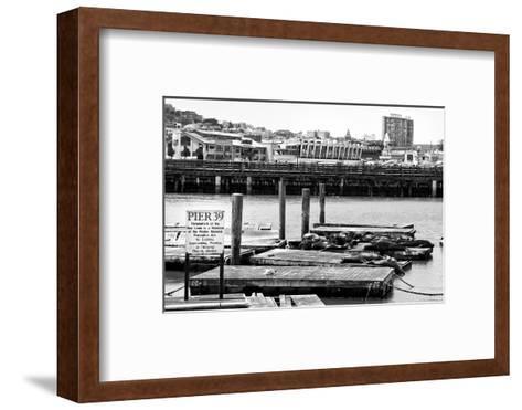 Pier 39 - Fisherman's Wharf - San Francisco - Californie - United States-Philippe Hugonnard-Framed Art Print