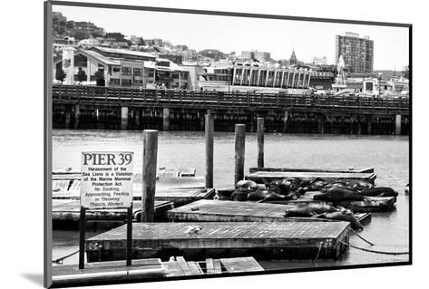Pier 39 - Fisherman's Wharf - San Francisco - Californie - United States-Philippe Hugonnard-Mounted Photographic Print