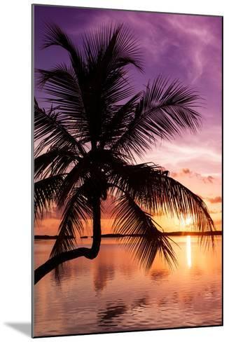 Palm Paradise at Sunset - Florida - USA-Philippe Hugonnard-Mounted Photographic Print