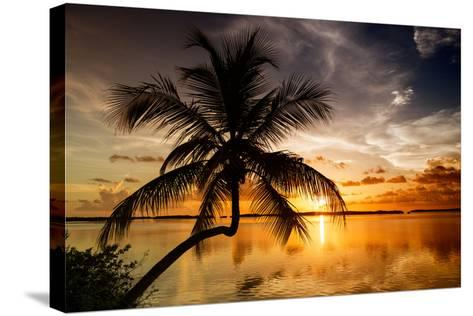 Palm Paradise at Sunset - Florida - USA-Philippe Hugonnard-Stretched Canvas Print