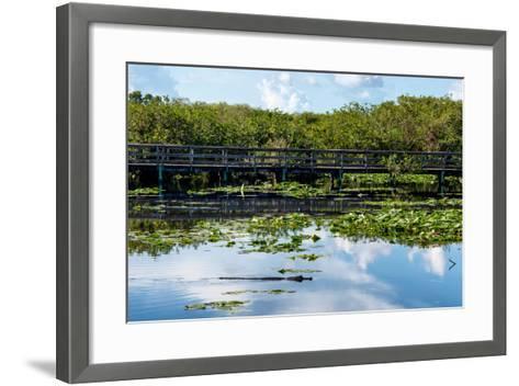 Crocodile - Everglades National Park - Unesco World Heritage Site - Florida - USA-Philippe Hugonnard-Framed Art Print