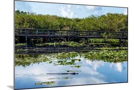Crocodile - Everglades National Park - Unesco World Heritage Site - Florida - USA-Philippe Hugonnard-Mounted Photographic Print