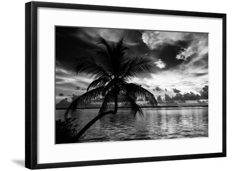Silhouette of Palm Tree at Sunset-Philippe Hugonnard-Framed Art Print