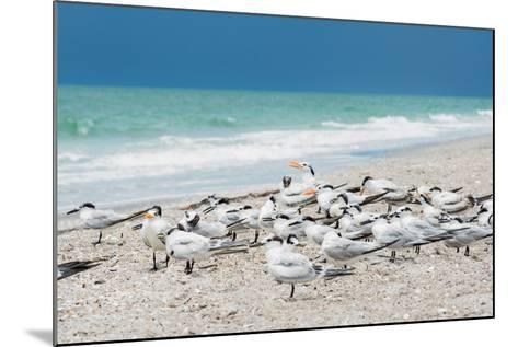 Seagulls on the Beach-Philippe Hugonnard-Mounted Photographic Print