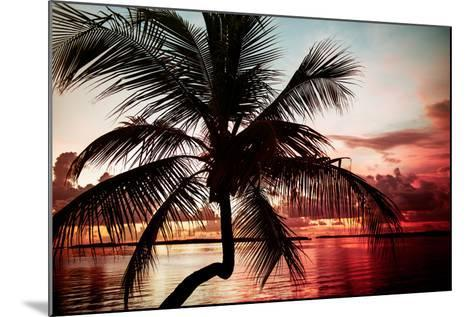 Palm Tree at Sunset - Florida-Philippe Hugonnard-Mounted Photographic Print