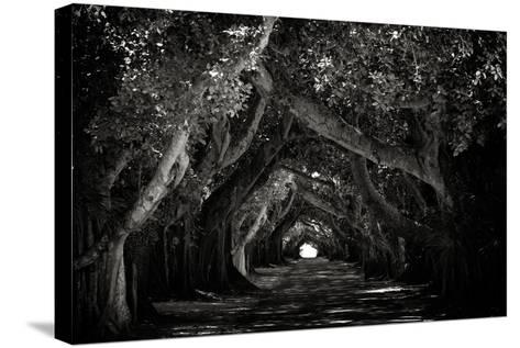 The Beautiful Banyan Tree-Philippe Hugonnard-Stretched Canvas Print