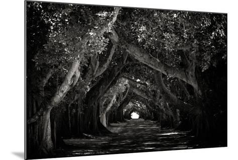 The Beautiful Banyan Tree-Philippe Hugonnard-Mounted Photographic Print